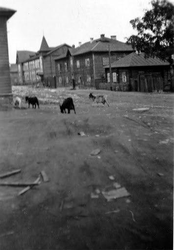 1937. Petroskoi. Kareldrev -trustin rakennus