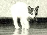 1987. Sveta