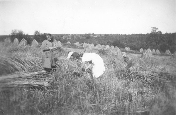 1941. East Karelia. Reaping the harvest left by the retreating Red Army