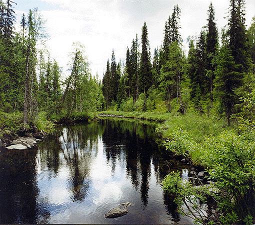 National Park Paanajärvi