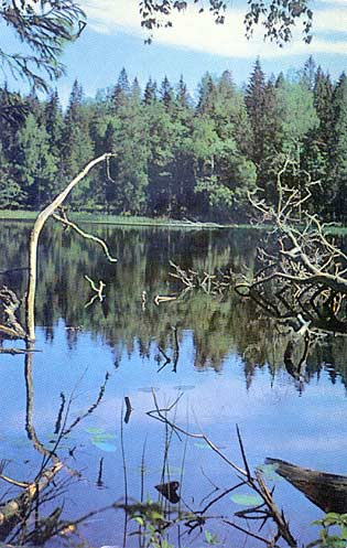 1975. Valaam. A lake in the forest