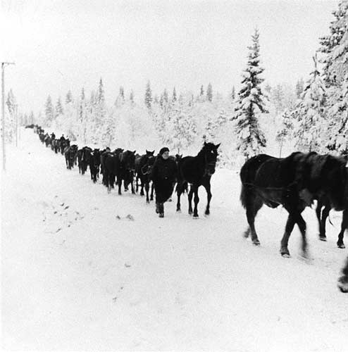 January 1940. The salvage horses are moved to Hyrynsalmi