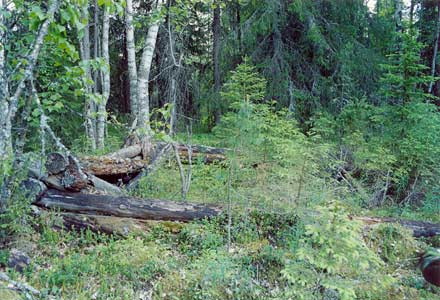 July 2003. Kalevala (Uhtua) district. The remnants of Kanussuo wood-cutters settlement that was used as a internee-camp for the citizens of Suomussalmi